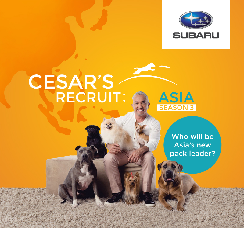 Cesar's Recruit: Asia Season 3